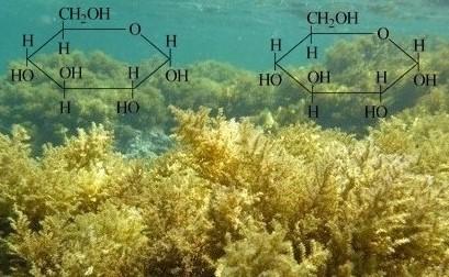 Caracterização Estrutural dos Polissacarídeos Sulfatados proveniente da Alga Parda Dictyola Caribaea (DICTYOTALES, Phaeophyta)